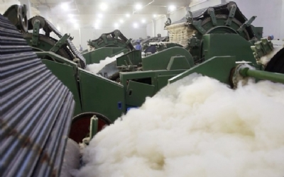 CABINET ADOPTS PROGRAM TO BOOST CASHMERE INDUSTRY
